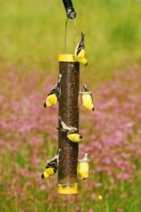 Droll Yankees BUF-15 Bottoms Up Nyjer Feeder for Goldfinches