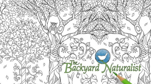 Page detail from Enchanted Forest Coloring Book for Grown Ups, with a doodle from The Backyard Naturalist.