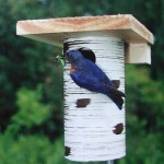 Gilbertson Bluebird Nesting Boxes at the Backyard Naturalist