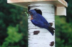 Gilbertson Bluebird Nest Box