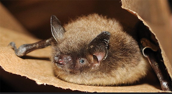 How To Support Bats In Your Backyard