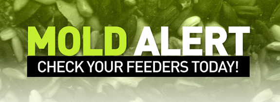 Urgent Mold Alert from The Backyard Naturalist. Check wild bird feeders for mold and clean ASAP.