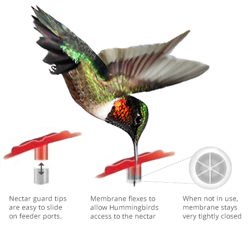The Backyard Naturalist recommends Aspects Hummingbird Nectar Guard Tips because unlike other products on the market, these really work!