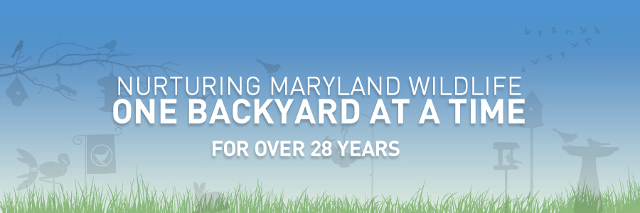The Backyard Naturalist has had the same mission for over 28 years: To foster appreciation for nature found in our own backyards. This is why we only stock the highest quality wildlife supplies, most thoughtful nature-themed gifts and the best free advice you'll find in Montgomery County, Maryland.