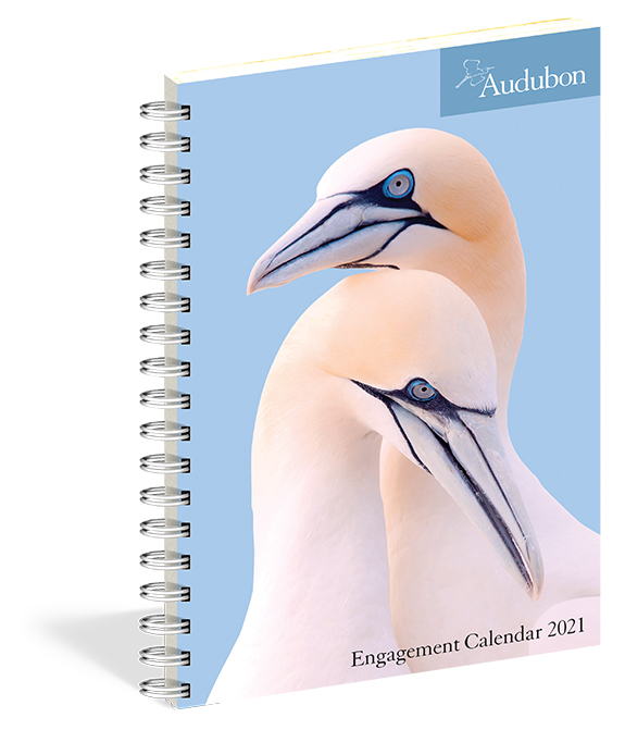 The 2021 Audubon Engagement Calendar, spiral-bound, is now in stock at The Backyard Naturalist.