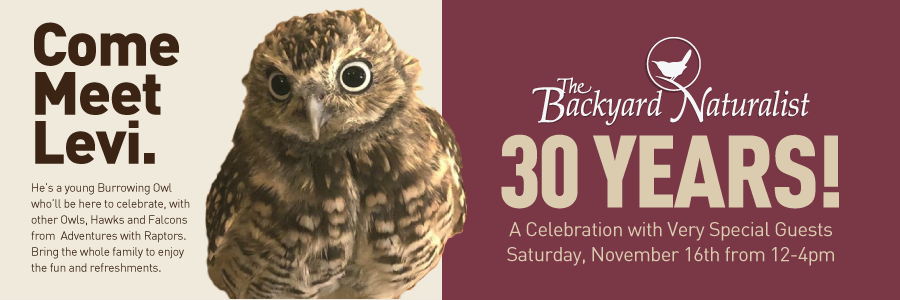The Backyard Naturalist is celebrating 30 years, this Saturday from 12-4pm, with special guests from Adventures with Raptors. Come meet Levi, a young burrowing Owl.