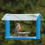 The Backyard Naturalist stocks Going Green Recycled Materials Feeders, like this one for feeding Eastern Bluebirds seeds, mealworms, fruit or jelly.