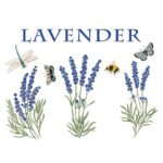 The Backyard Naturalist has Alice's Cottage new Spring 2021 Collection, including'Lavender'.