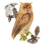 The Backyard Naturalist has Alice's Cottage new Spring 2021 Collection, including 'Owl'