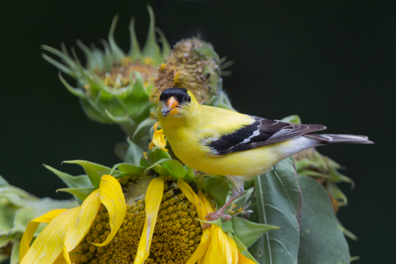 October is the peak of natural food sources for wild birds.