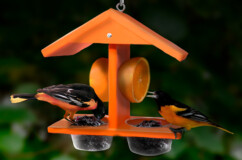 Recycled Double Fruit and Jelly Oriole Feeder