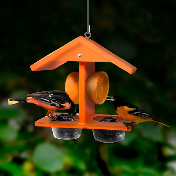 The Backyard Naturalist has Oriole feeders like this one, that serves berry fruit jelly and orange halves. Go, Orioles!!!s
