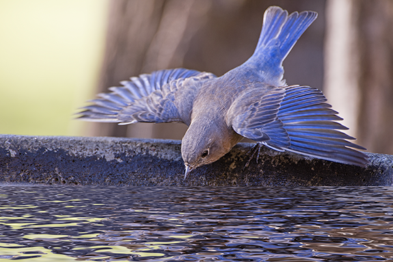 Just add water! A bird bath is an opportunity to attract non-seed eaters to your backyard.