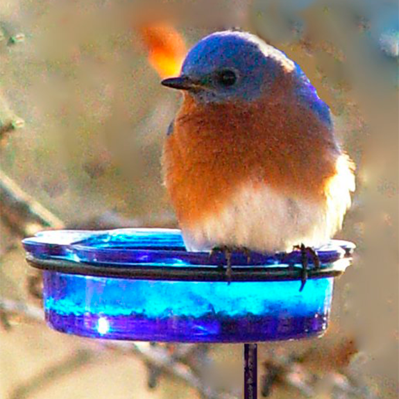 The Backyard Naturalist has the beautifully simple step-in Bluebird feeder with a blue glass dish. Bluebird enjoying mealworms!