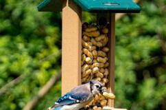 Recycled Bluejay Whole Peanut Feeder