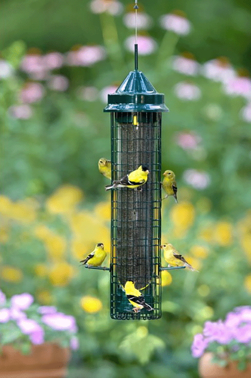 The Backyard Naturalist has Brome Bird Care's Squirrel Buster Finch Feeder in stock.