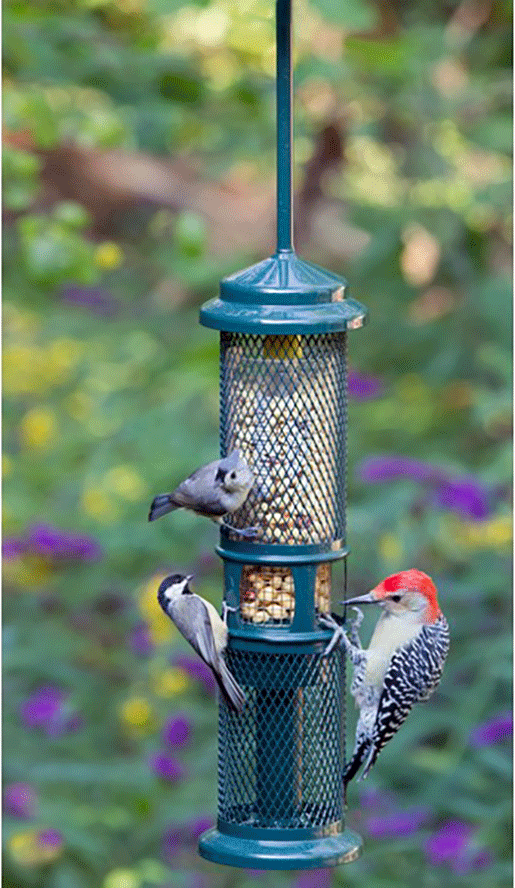 The Backyard Naturalist has Brome Bird Care's Squirrel Buster Peanut Feeder in stock.