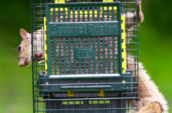 Squirrel-Buster Suet Feeder