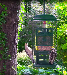 Squirrel Proof Suet Feeder with weight-sensitive spring mechanism allows birds to eat, denies squirrels and larger birds access.