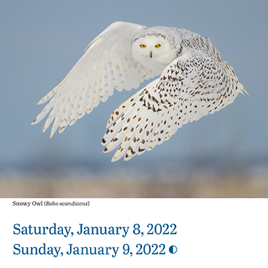 Audubon's Page-A-Day Birds Calendar,  an interior Day page pictured.