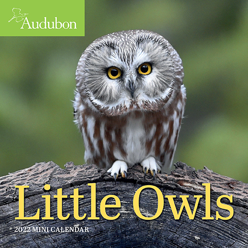 2022 Calendars are in stock at The Backyard Naturalist! Pictured, one of our favorites: Little Owls mini calendar by Audubon. (front)
