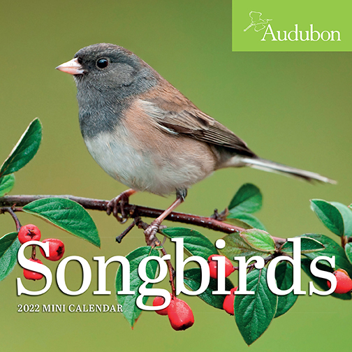 2022 Calendars are in stock at The Backyard Naturalist! Pictured, one of our favorites: Songbirds mini calendar by Audubon. (front)