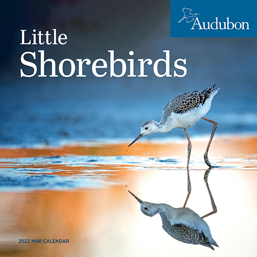 2022 Calendars are in stock at The Backyard Naturalist! Pictured, one of our favorites: Shorebirds mini calendar by Audubon. (front)