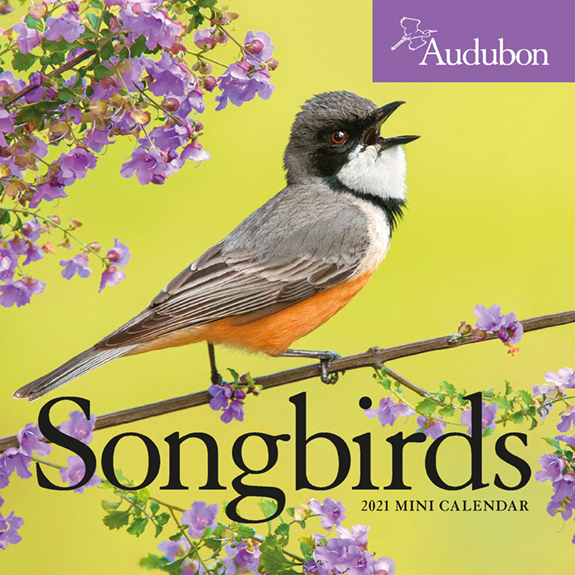 The 2021 Audubon Songbirds Mini Calendar, now 50% off..