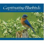 Captivating Bluebirds: A book by Stan Tekiela. Stunning photos of Bluebirds with concise informative and entertaining writing. Available from The Backyard Naturalist store in Olney, Maryland.