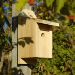The Backyard Naturalist has many bird house styles available, like the Chickadee Joy Box.