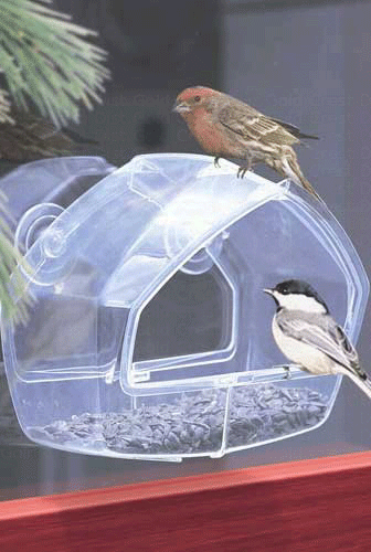 The Backyard Naturalist has the Clear Window Feeder in stock.