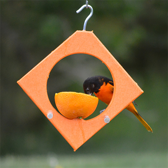 The Backyard Naturalist offers many options for feeding oranges to your backyard birds, including this clever Diamond shaped Orange Feeder.