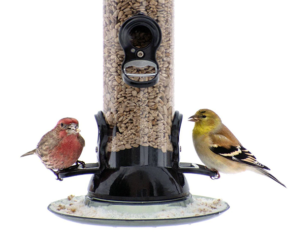 The Backyard Naturalist is the DC Metro Area's only certified Platinum Droll Yankees dealer, including the Clever Clean and Fill Thistle and Sunflower Feeders.