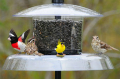 Squirrel/Large Bird Resistant Feeders