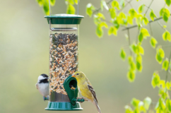 Droll Yankees New Generation Sunflower and Nyjer (Thistle) Bird Feeders