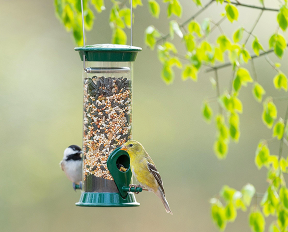 The Backyard Naturalist frequently recommends Droll Yankees New Generation Feeders as a good starter feeder for beginners.