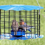 The Backyard Naturalist stocks Erva's Squirrel and Starling-proof Meal Worm feeders. Eastern Bluebirds eating meal worms featured in image.