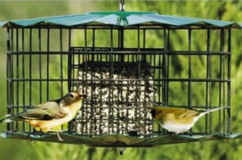 Squirrel-Proof Double Suet Cake Feeder