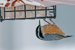 Upside-Down Suet Feeder