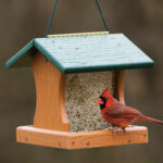 The Backyard Naturalist frequent recommendation Going Green Recycled Feeders, this one is the Pro 5, GGPRO5.