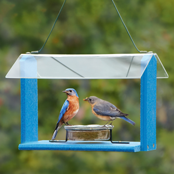 The Backyard Naturalist has Bluebird feeders! Including this Going Green Recycled Feeder with Glass Dish and plexiglass roof.
