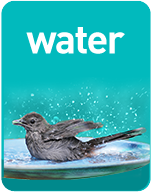 The Backyard Naturalist's Guide to Backyard Habitats & WATER - one of three simple elements.