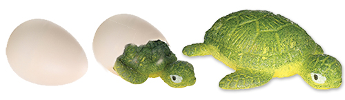 The Backyard Naturalist has Toysmith's Hatchin Grow Turtles, Frogs, Lizards and Dinosaurs.