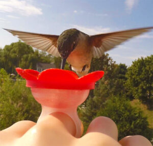 Hand feed Hummingbirds with this fun 'Hummer Ring'. Fill with nectar and stand still! How cool is this???!!!