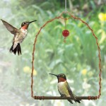 TheBYN-Hummingbird-Perch