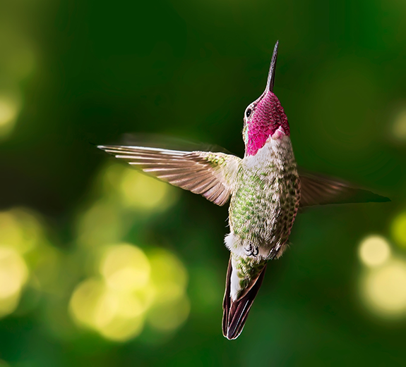 The Backyard Naturalist's Guide to Feeding and Attracting Hummingbirds during Migration 2019.