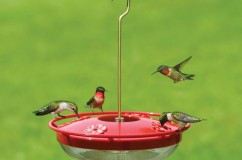 Hummingbird Feeders, Food