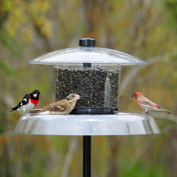 The Backyard Naturalist sells Droll Yankees Jagunda Large Bird Resistant Bird Seed Feeder.