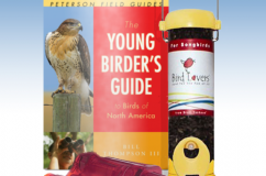 For Junior Birders
