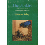 The Backyard Naturalist recommends 'The Bluebird'